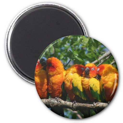 Row of Cute Little Parrots Snuggling Magnet