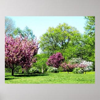 Row of Flowering Trees Prints & Posters