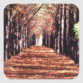 Row of Pine Trees in Forest Stickers