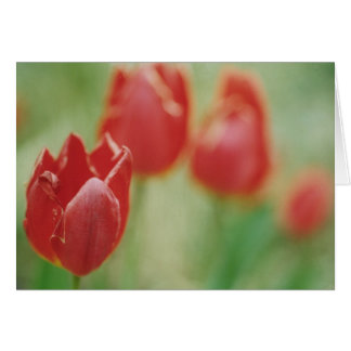 """""""Row of Red"""" Greeting Card"""