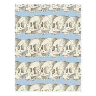 Row of Skulls Postcard