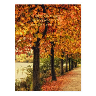 Row of trees in Autumn Postcard