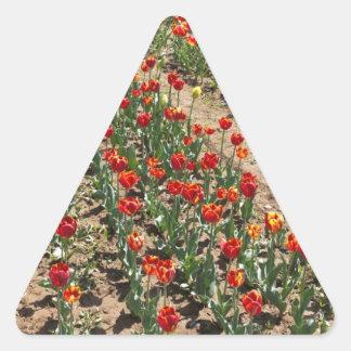 Row of Tulips in a garden Triangle Sticker