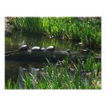 Row of Turtles Green Nature Photo