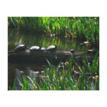 Row of Turtles Green Nature Photo Canvas Print