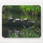 Row of Turtles Green Nature Photo Mouse Pad