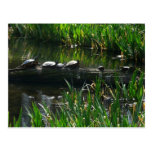 Row of Turtles Green Nature Photo Postcard