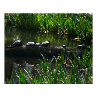 Row of Turtles Green Nature Photo Poster