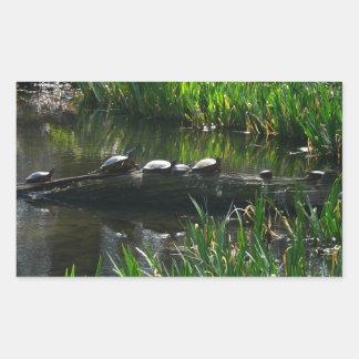 Row of Turtles Green Nature Photo Rectangular Sticker
