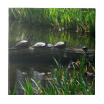 Row of Turtles Green Nature Photo Tile