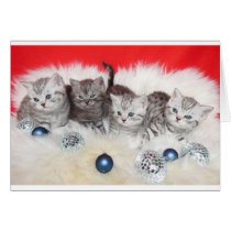 Row young tabby cats on sheep skin with christmas card