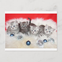 Row young tabby cats on sheep skin with christmas holiday postcard