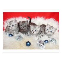 Row young tabby cats on sheep skin with christmas postcard