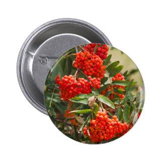Rowan berries on tree button