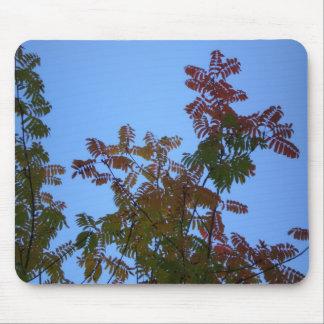 Rowan Tree Fall Mouse Pad