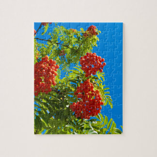 Rowan tree  with red berries jigsaw puzzle