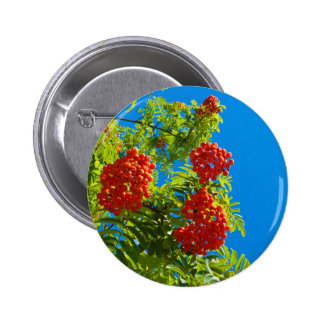 Rowan tree  with red berries pinback button