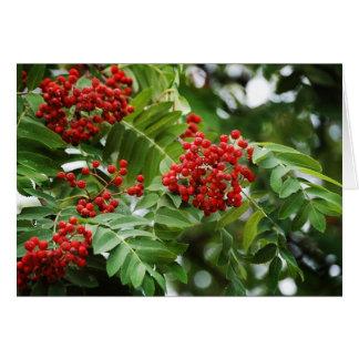 Rowanberries 01 greeting card