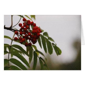 Rowanberries 03 greeting card