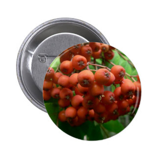 Rowanberries Pinback Buttons