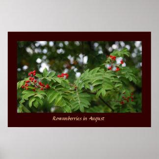 Rowanberries in August 02 Poster