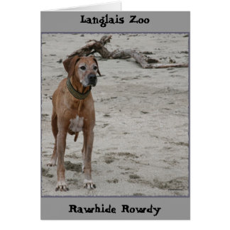 Rowdy, Rawhide Rowdy, Langlais Zoo Stationery Note Card