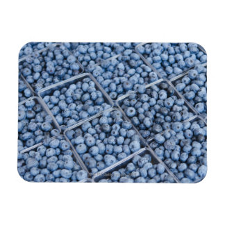 Rows of blueberries magnet