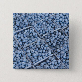 Rows of blueberries pinback button