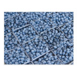 Rows of blueberries postcard