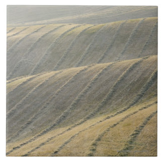 Rows of Harvested Wheat Field, Val d'Orcia, Large Square Tile