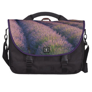 Rows of lavender in Provence Laptop Bag