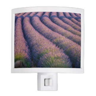 Rows of lavender in Provence Night Light