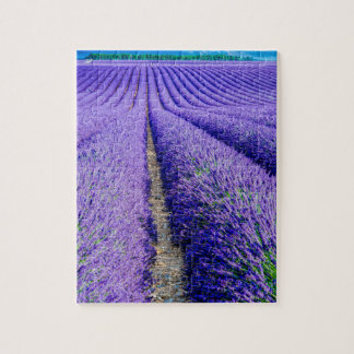 Rows of Lavender, Provence, France Puzzle