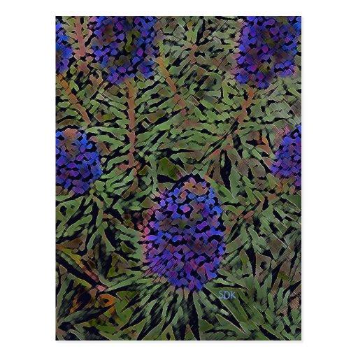 Rows of purple california lavender plant del mar postcard for Purple flower shrub california