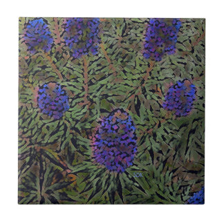 Rows of Purple California Lavender Plant  Del Mar Tile
