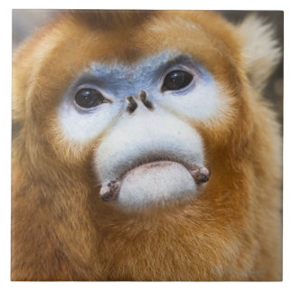 Roxellana de oro masculino de Pygathrix del mono Azulejo Cuadrado Grande