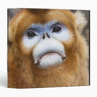 """Roxellana de oro masculino de Pygathrix del mono Carpeta 1 1/2"""""""