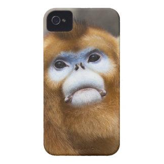 Roxellana de oro masculino de Pygathrix del mono Case-Mate iPhone 4 Protector