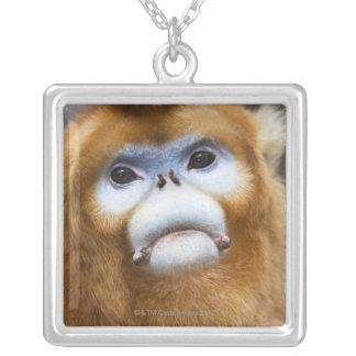 Roxellana de oro masculino de Pygathrix del mono, Colgante Cuadrado