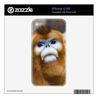Roxellana de oro masculino de Pygathrix del mono iPhone 4 Skin