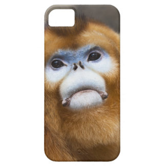 Roxellana de oro masculino de Pygathrix del mono, iPhone 5 Fundas
