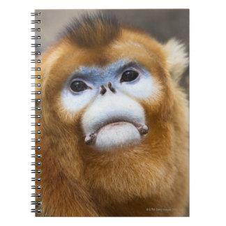 Roxellana de oro masculino de Pygathrix del mono Libro De Apuntes