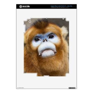 Roxellana de oro masculino de Pygathrix del mono Pegatinas Skins Para iPad 3