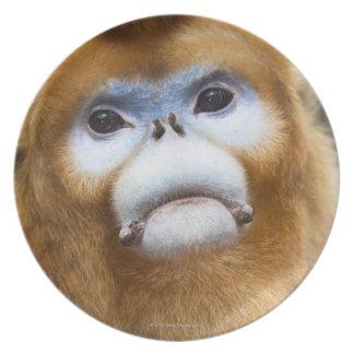 Roxellana de oro masculino de Pygathrix del mono, Plato
