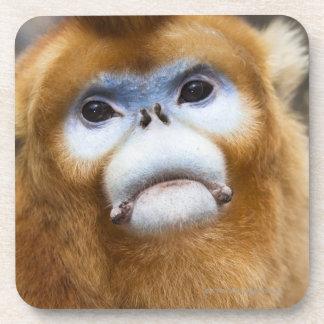 Roxellana de oro masculino de Pygathrix del mono Posavasos De Bebidas