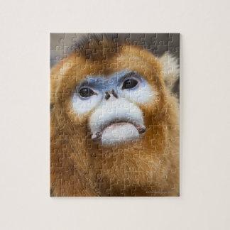 Roxellana de oro masculino de Pygathrix del mono,  Rompecabezas