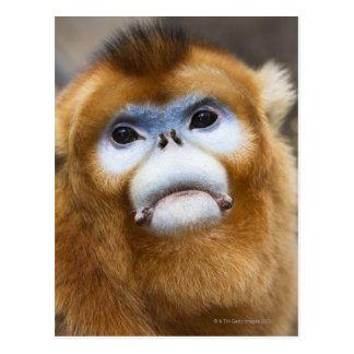 Roxellana de oro masculino de Pygathrix del mono, Tarjeta Postal