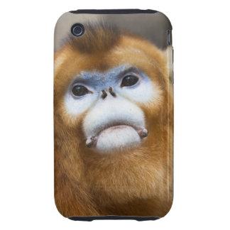 Roxellana de oro masculino de Pygathrix del mono, Tough iPhone 3 Cárcasas