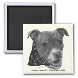 Roxy, American Pit Bull Terrier 2 Inch Square Magnet