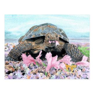 Roxy la postal de la tortuga